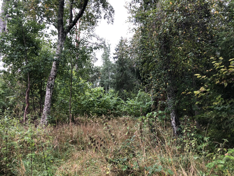 Timmerdalen skogsvård